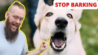 How to Train Your Dog to STOP BARKING at EVERYTHING