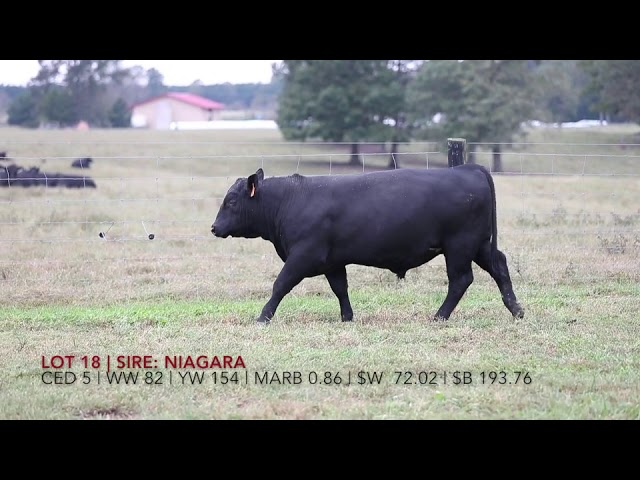 Edgewood Angus Lot 18
