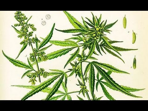 Cannabis Britannica: The rise and demise of a Victorian wonder-drug - Professor James Mills