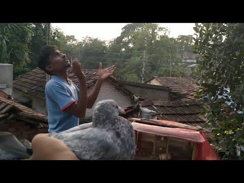 High Flyer Desi Pigeons Ronojeet Bhai Kaa (ep-1)