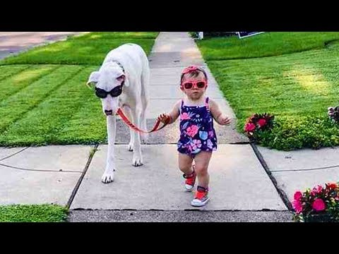 Dog loves Baby  Dogs and Babies Have Fun Time on Outdoor