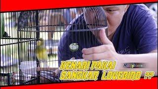Pakai Sangkar Lovebird, Kenari Tampil Makin Mewah !!