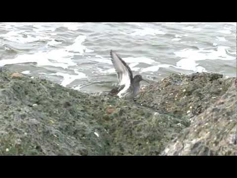 Vogels op het strand en de pier van IJmuiden