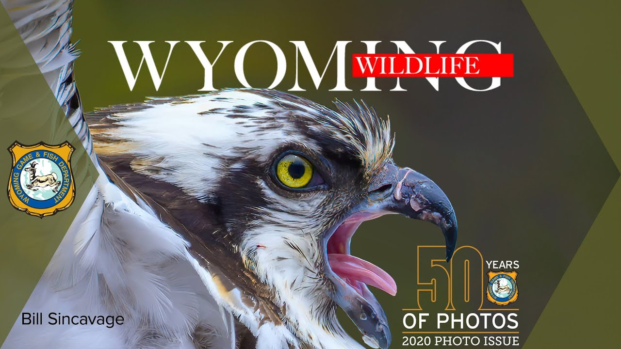 contest wildlife wyoming winners