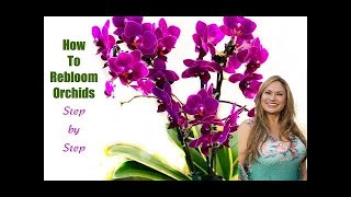 HOW TO MAKE ORCHIDS REBLOOM,  STEP BY STEP