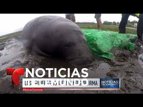 Especial de Noticias Telemundo por el paso de Irma por Florida (Parte 6) | Noticias Telemundo