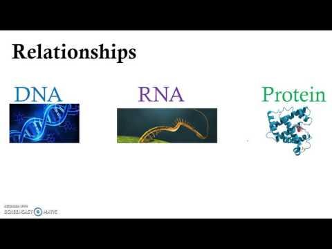 Molecular Physiology Introduction