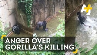 Gorilla Killed After 4-Year-Old Falls Into Enclosure
