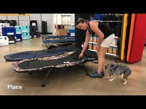 1 yo Mini Aussie (Brody) Best Dog Trainers in Fredericksburg VA