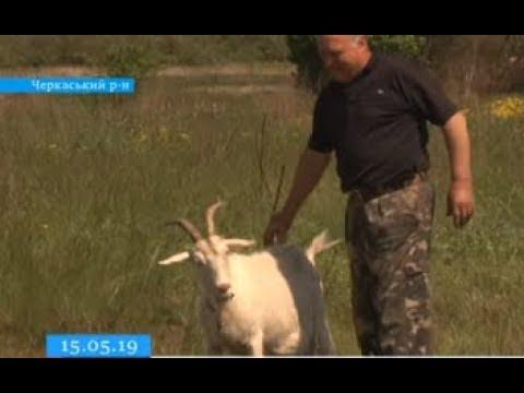 ТРК ВіККА: Кривава розправа: на Черкащині чоловік застрелив пса просто перед дітьми