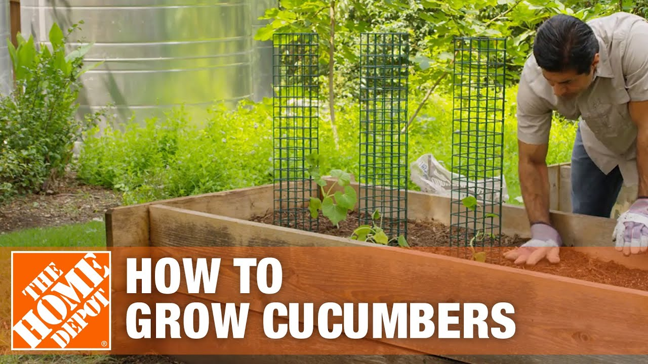 How To Grow Cucumbers Planting Cucumbers The Home Depot Youtube
