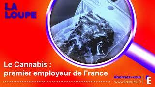 PODCAST. Le cannabis, premier employeur de France