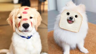 Adorable dogs funny babies | Ultimate dog fun