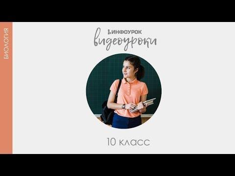 Видеоуроки биология 10