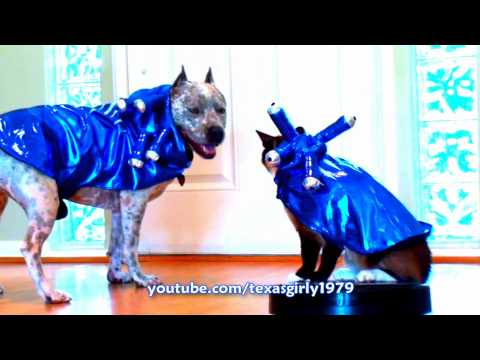 Halloween Roomba Cat and Dog pit bull Sharky! (Full)