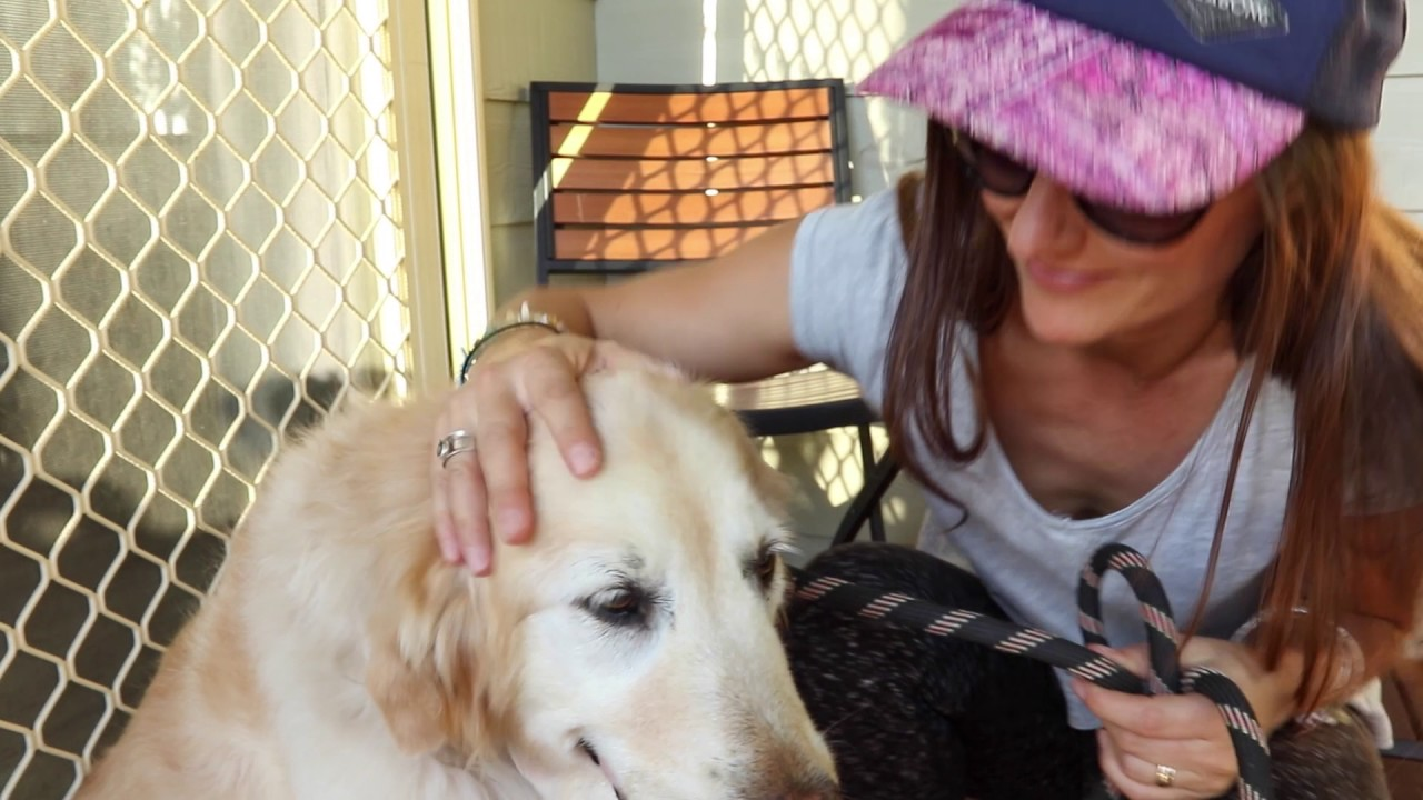 We love dogs - BIG4 Gold Coast Holiday Park