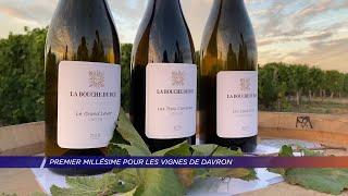 Yvelines | Premier Millésime pour les Vignes de Davron