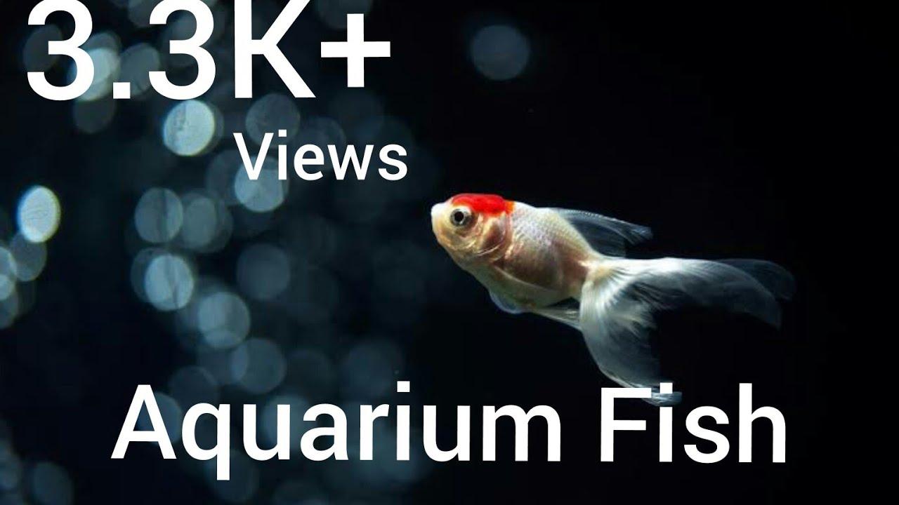 Aquarium Fish Katabon Dhaka Bangladesh Youtube