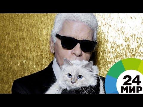 Любимая кошка Карла Лагерфельда может унаследовать все состояние - МИР 24