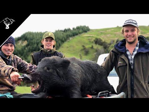 Pig Hunting NZ | Public Land Boar | 3 Pigs