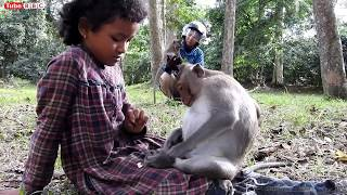 WOW! Amazing Monkey picking lice from girl hair