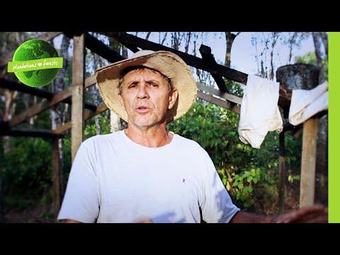 Reducing Emissions.  New Generation Plantations.  Acre, Brazil