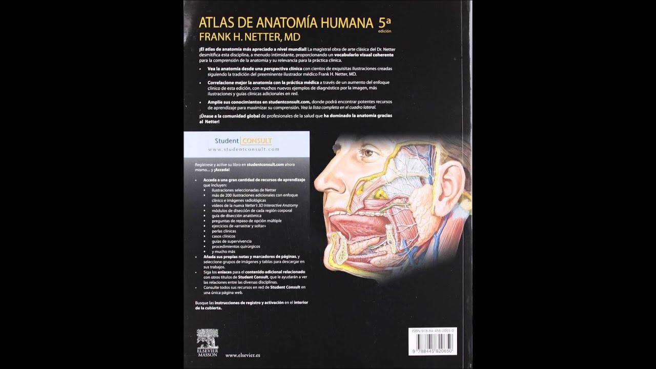Netter Atlas de Anatomia Humana 5 edicion quinta - YouTube