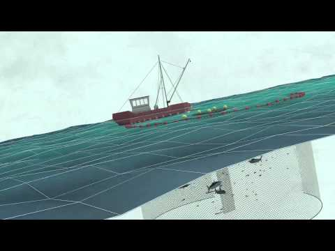 Fish Aggregating Devices (FADs) | Pew