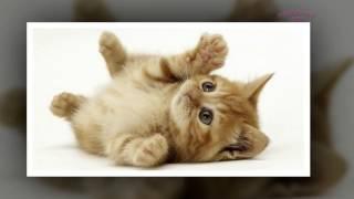 Подборка Котят! Мимишные котики ТОП фото!