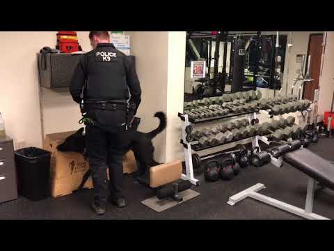 K9 drug-detection training (Clackamas County Sheriff's Office)