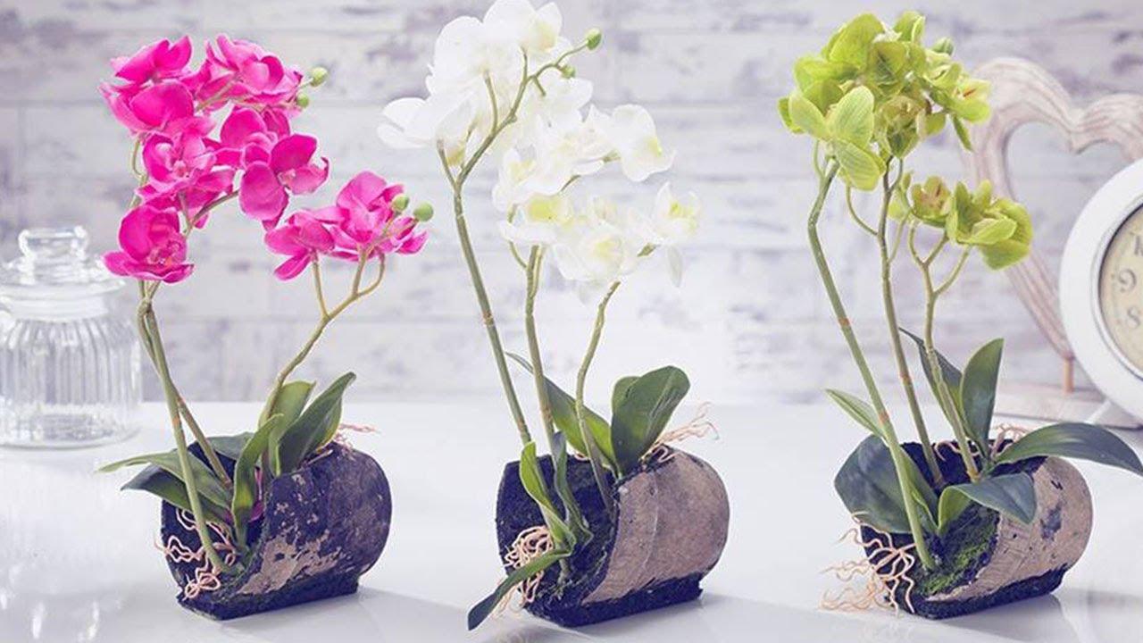 В чем лучше выращивать фаленопсисы?  Какие горшки идеально подходят орхидеям?