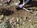 草むしりマイスターの草むしり の動画、YouTube動画。