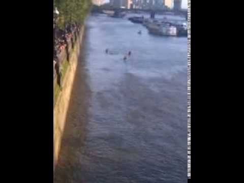 I went to watch David Walliams swim the River Thames (paws up)