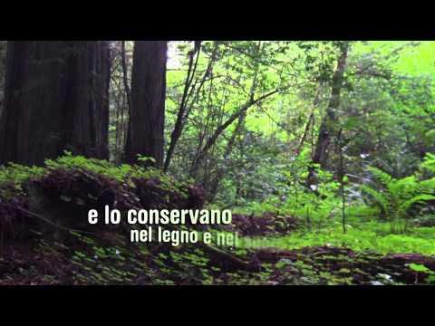 Giornata Internazionale delle Foreste 2015