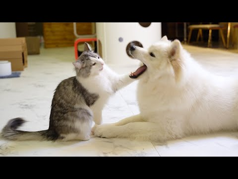 Super Weird Dog And Cat's Funniest Moments