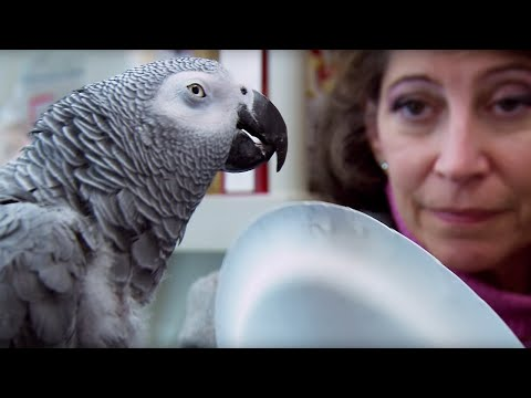 Parrot vs Child: The Intelligence Test - Extraordinary Animals - Earth