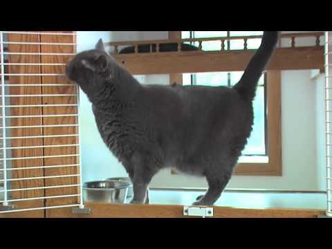 Pet Palace Resorts | Columbus, OH | Pet Boarding and Grooming
