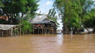 Mekong delta Vietnam, local farmer is feeding fish that is so interesting!