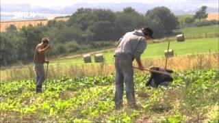 Faktencheck: Ökologische Landwirtschaft | Odysso - Das will ich wissen!