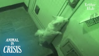 Dog Had To Wait Outside For 3 Months To See His Grandpa Again | Animal in Crisis EP208