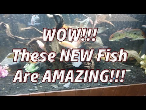 WOW!!! These NEW Fish Are AMAZING!!! #new #fish