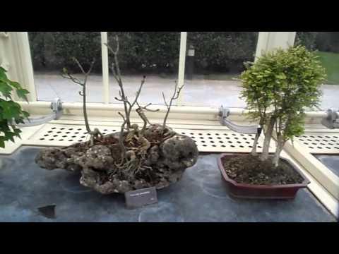 Bonsai exhibition at National Botanical Gardens Ireland