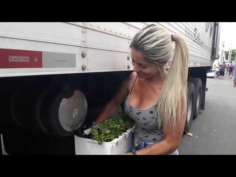 Correria  gostosa no Ceagesp sp. Cuidando minha mini horta na carreta thumbnail