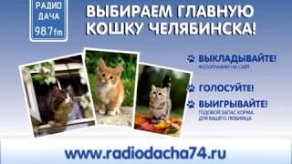 Разыскивается Главная кошка Челябинска!!!