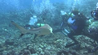 ヤップ島 サメ うねり強し ヤップ島 検索動画 12