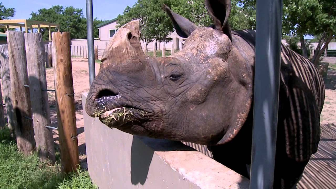 KPTS Amazing Animals at Tanganyika Wildlife Park - Rhinoceros