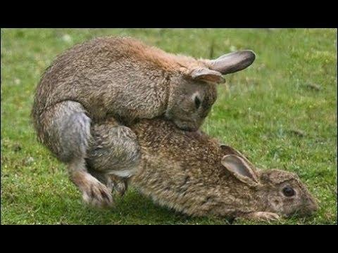 Conejos haciendo el amor [PUNIQRANDLINE-(au-dating-names.txt) 61