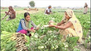 मिलिए गांव के किसान, सब्जी की खेती II खेती नहीं, खाना नहीं तो जीवन नहीं 50K SUBSCRIBERS THANKS