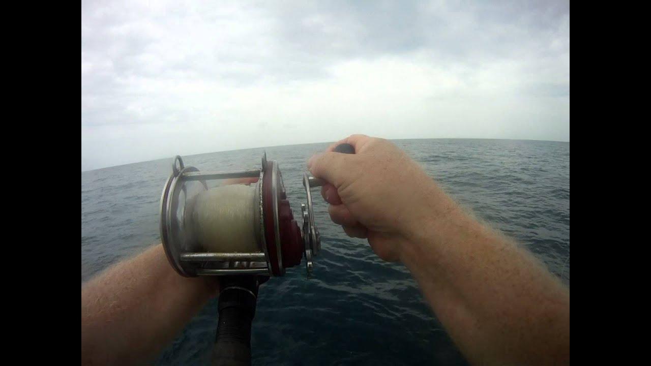 Port aransas deep sea fishing shark caught port aransas for Port aransas deep sea fishing