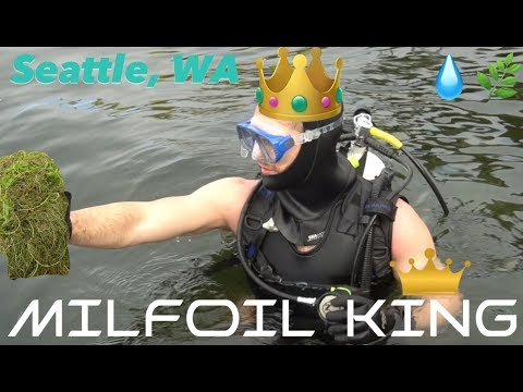 Sustainable Shorelines W/ The Milfoil King Joe Markman  👑💧🌿